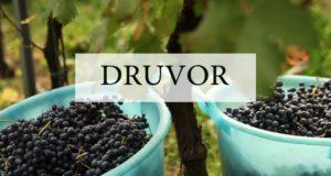druvor1